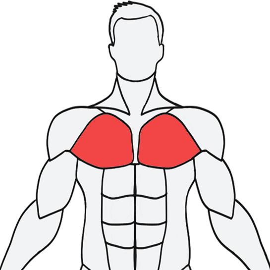 Select a muscle and it provides the exercises to workout the selected muscle